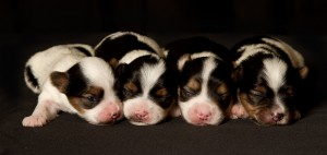 AVAILABLE BABIES-Born 3/13/2012-Two Boys and One Girl!!!!
