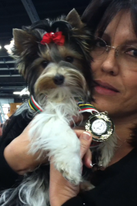 Tesa at the 2012 IABCA Dog Show, Santa Rosa, CA